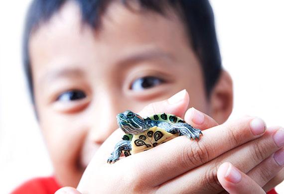 Мальчик держит в руках черепашку