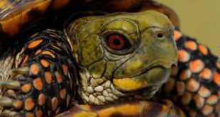 Глаз черепахи