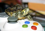 Черепаха сидит на джойстике
