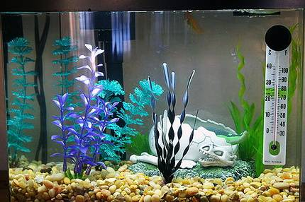 Температура воды в аквариуме