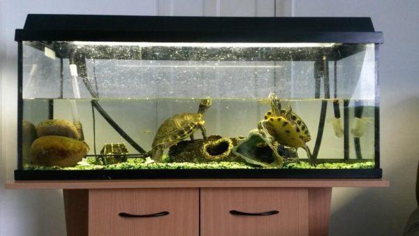 Аквариум с красноухими черепахами с внешним фильтром