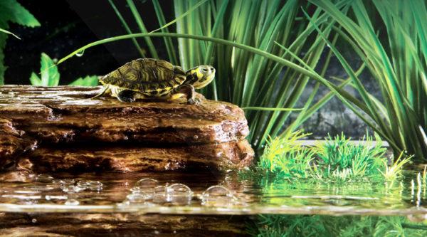 Остров для черепах с фильтрацией