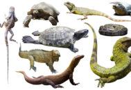Животные относящиеся к классу рептилий