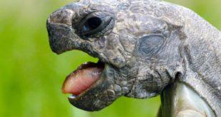 Черепаха чихает