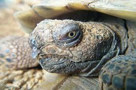Сопли у черепахи