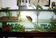 Оборудование аквариума для черепахи
