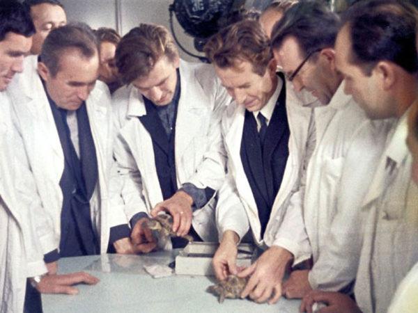Ученые отбирают черепах для отправки в космос