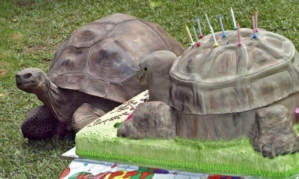 Черепаха Гариетта празднует свой день Рождения