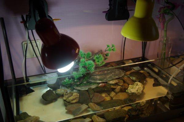 УФ-лампа и лампа накаливания для аквариума с черепахой