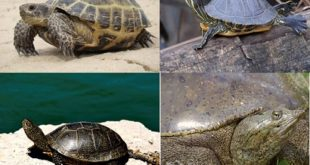 Виды черепах в России