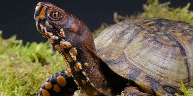 Красивое фото черепахи