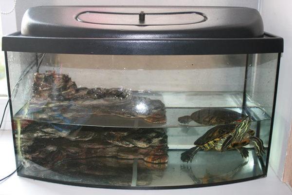 Отсадник для черепахи
