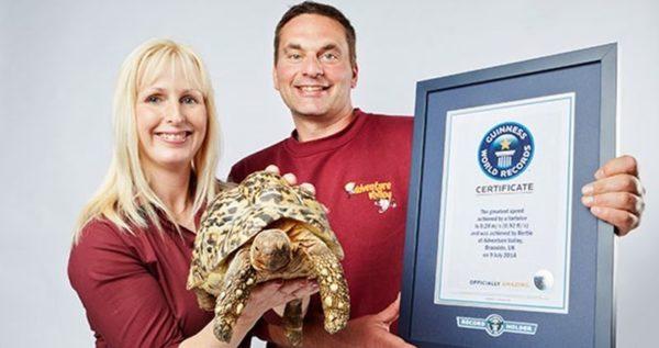 Рекорд Гиннесса самая быстрая черепаха