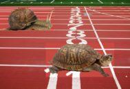 улитка и черепаха соревнуются в скорости