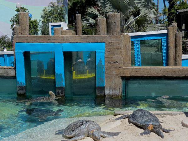 Черепахи в зоопарке