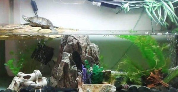 Аквариум с островком для черепахи