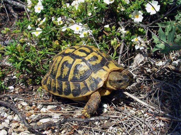 Черепаха ползет по земле