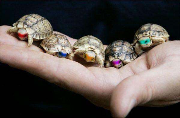 Черепашки в масках черепашек ниндзя