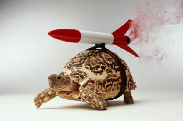Забавное фото черепаха с торпедой на спине
