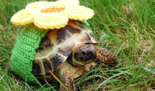 Черепаха с цветочком