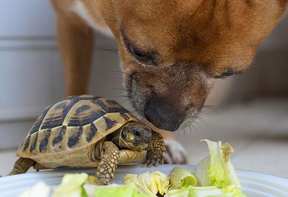 Собака нюхает черепаху