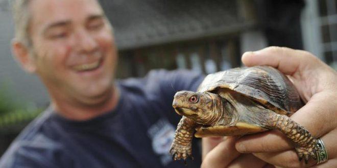 Мужчина держит в руках черепаху