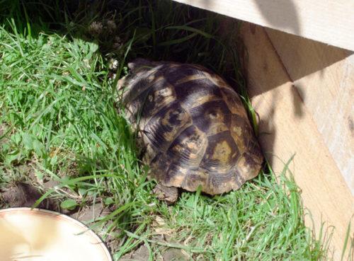 Черепаха спряталась в тени