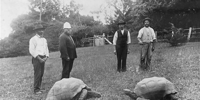 Самая старая черепаха в мире на сегодняшний день Джонатан (слева)