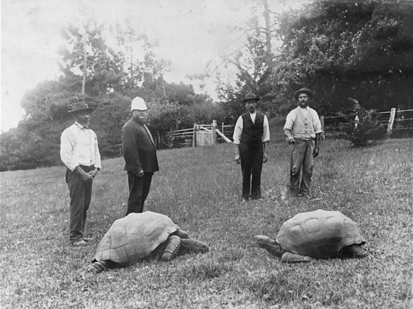 Фото черепахи джонотана 1886 года