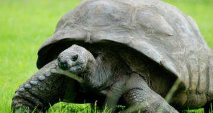 черепаха Джонатан