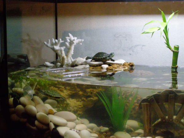 Декоративная модель островка своими руками для красноухой черепахи