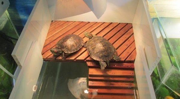 Деревянный берег для красноухой черепахи