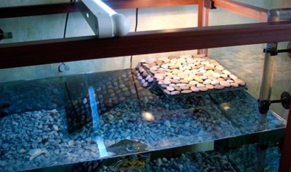 Полочка из камешков своими руками для красноухой черепахи