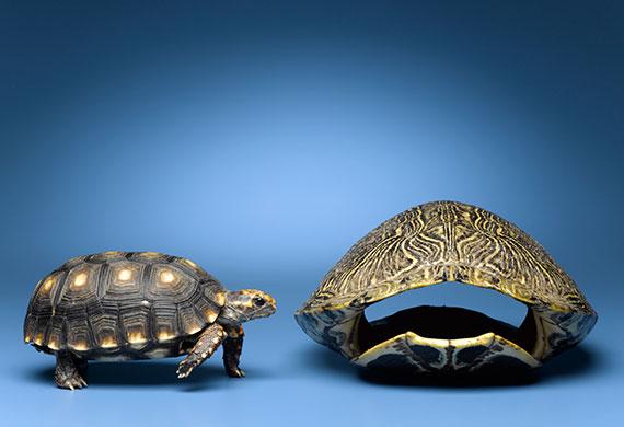 Черепаха и панцирь