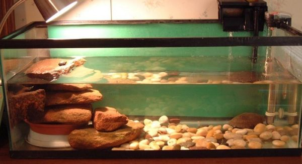 Островок из камня своими руками для красноухой черепахи