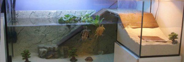 Насыпная суша для водных черепах