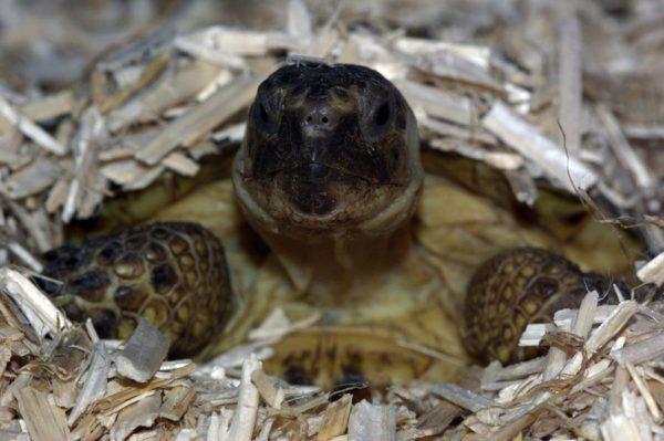 Наполнитель для сухопутных черепах