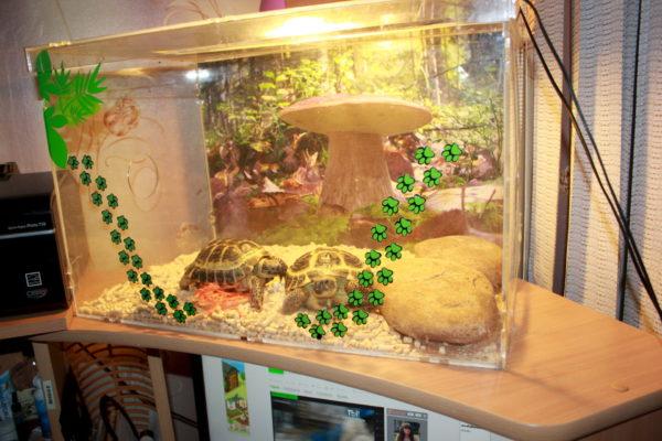 Террариум из оргстекла для черепах своими руками
