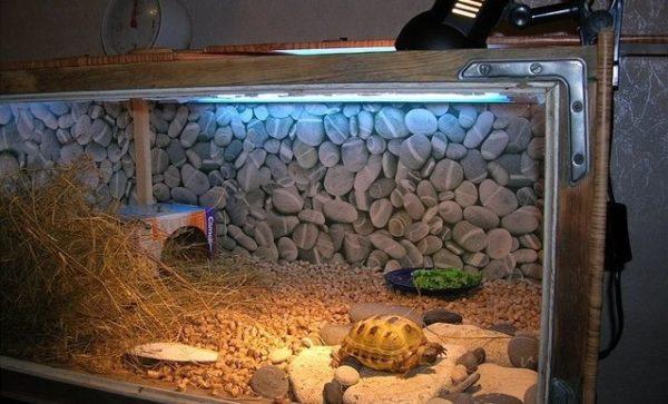 Террариум для черепах своими руками из подручных материалов
