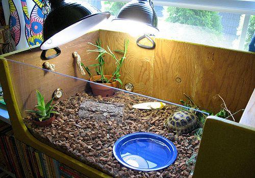 Обустройство террариума для сухопутной черепахи