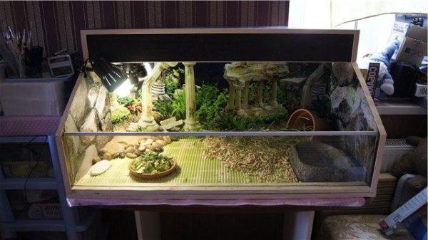 Открытый террариум для сухопутной черепахи