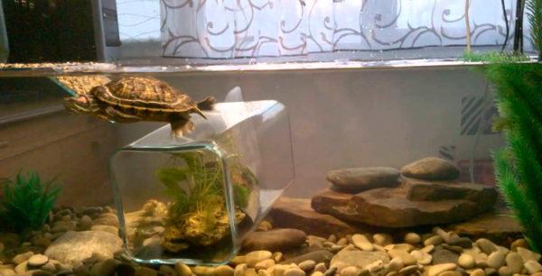 Наполнитель галька для аквариума с черепахами