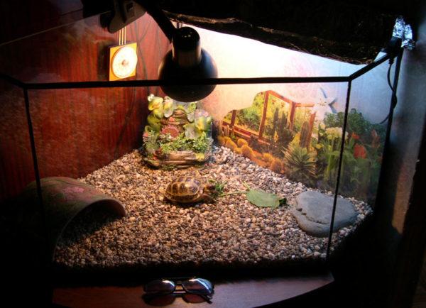 Наполнитель галька в террариум для черепах