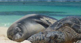 Огромная морская черепаха