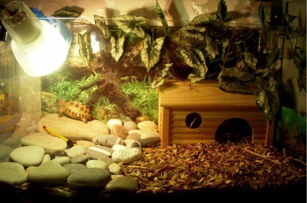 Наполнитель кокосовый субстрат в террариум для черепах