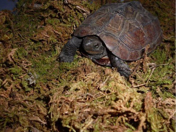 Наполнитель мох в террариум для черепах
