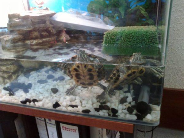 Наполнитель мрамор для аквариума с черепахами