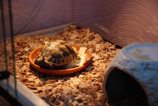 Наполнитель щепа в террариум для черепах