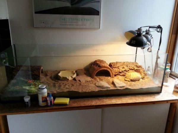 Наполнитель песок в террариум для черепах