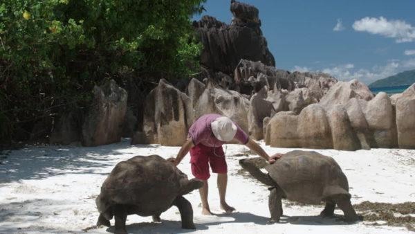 Дружелюбные сейшельские черепахи